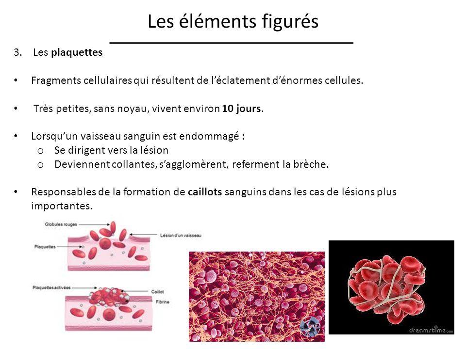Les éléments figurés 3. Les plaquettes