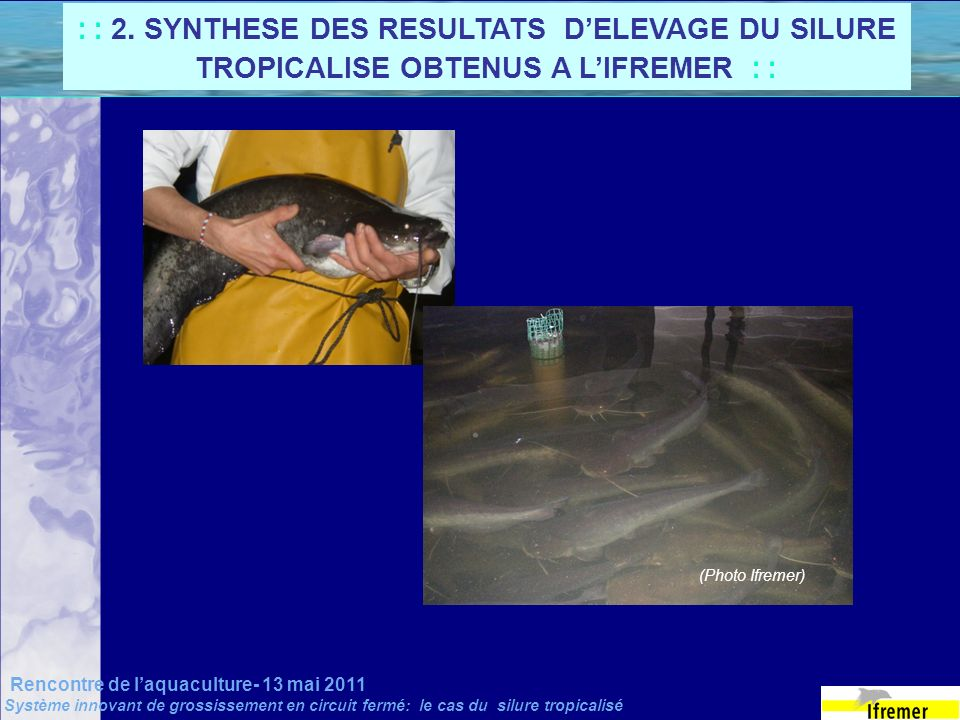 : : 2. SYNTHESE DES RESULTATS D'ELEVAGE DU SILURE