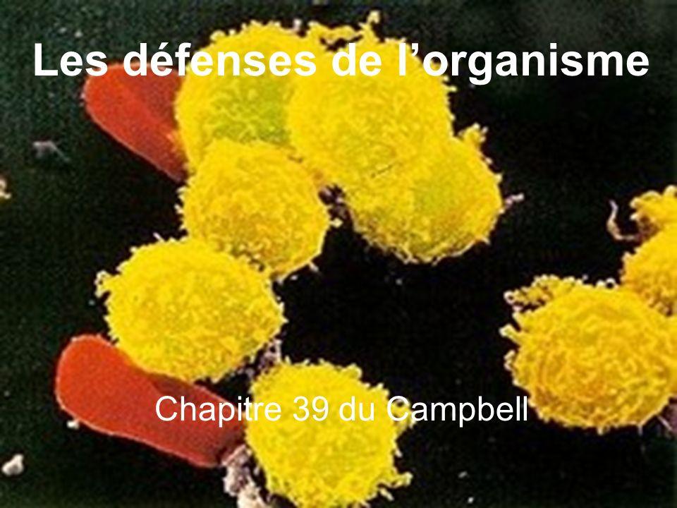 Les défenses de l'organisme