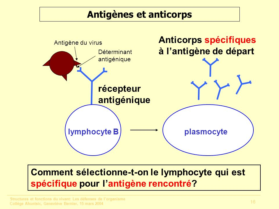 Antigènes et anticorps