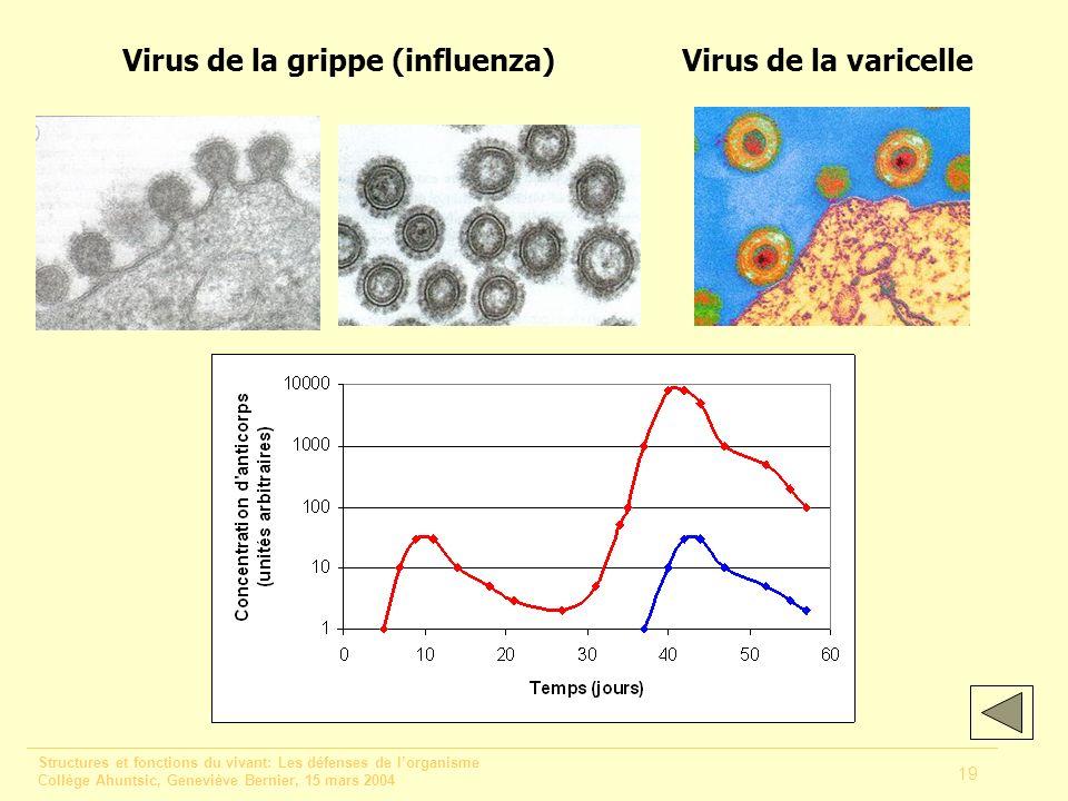 Virus de la grippe (influenza)