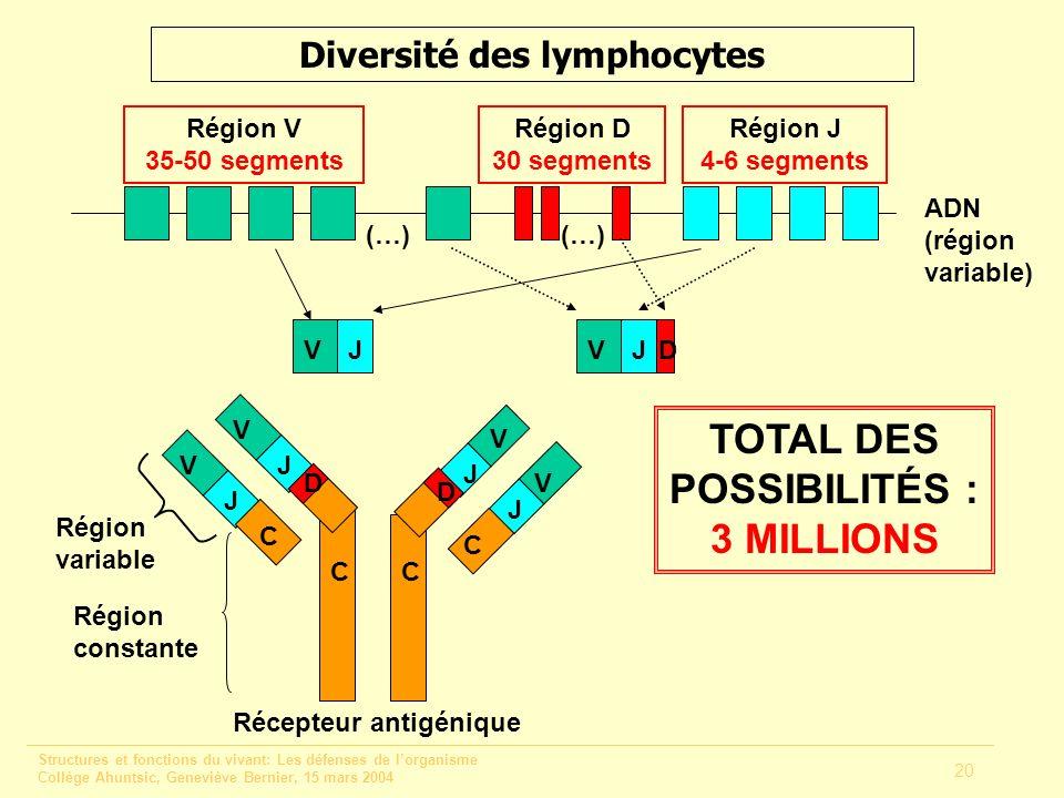 Diversité des lymphocytes TOTAL DES POSSIBILITÉS : 3 MILLIONS