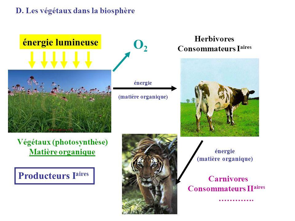 Végétaux (photosynthèse)
