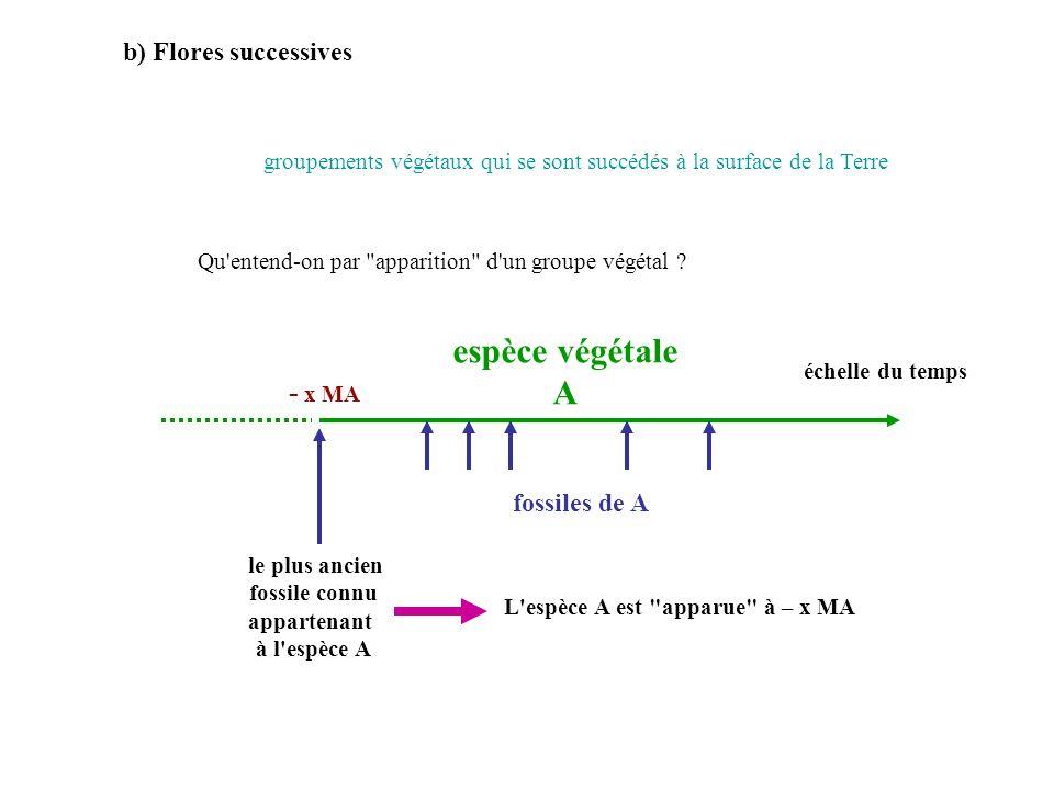 espèce végétale A - x MA b) Flores successives fossiles de A
