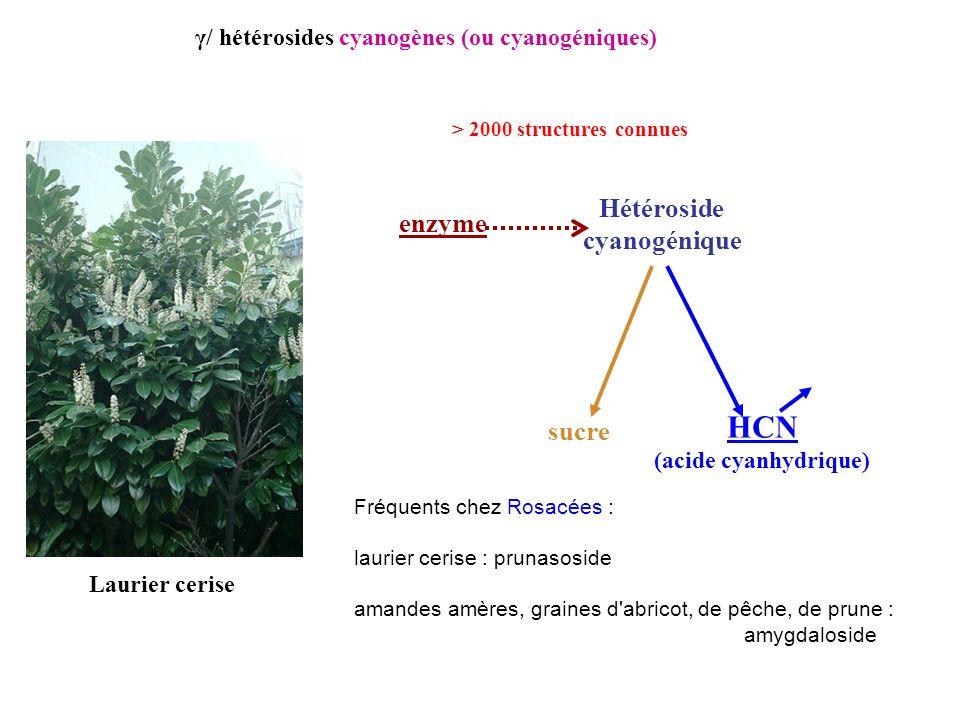 HCN Hétéroside enzyme cyanogénique sucre