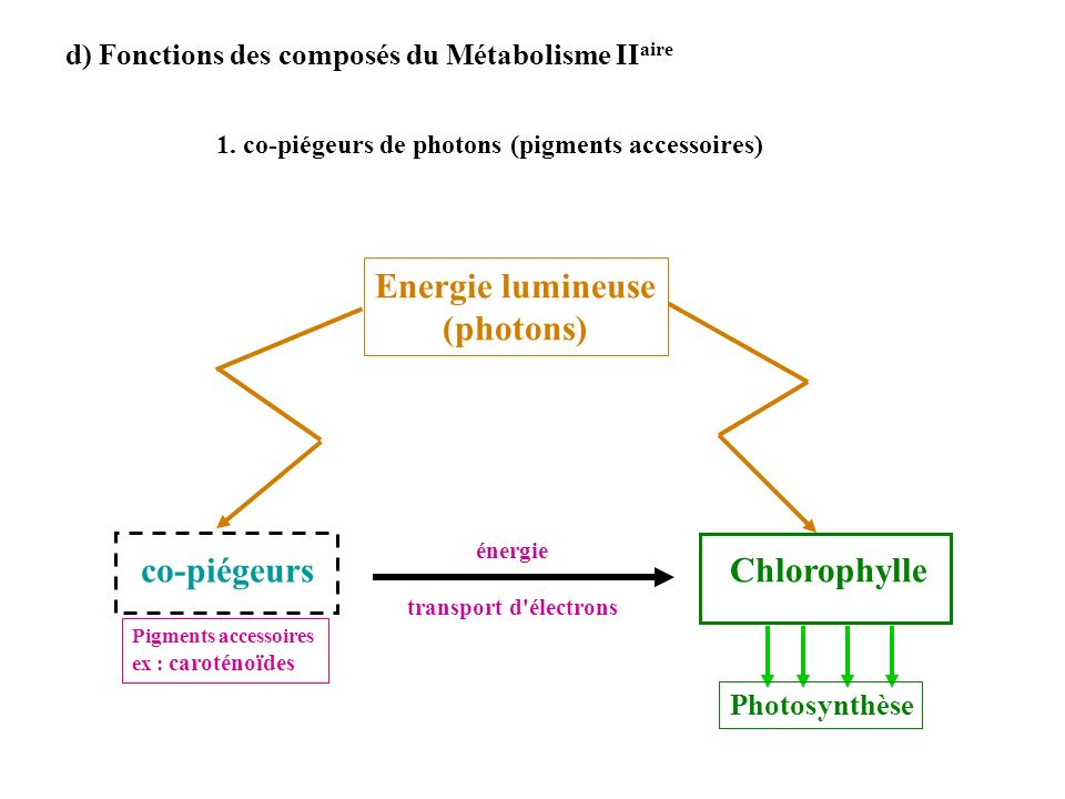 Energie lumineuse (photons)