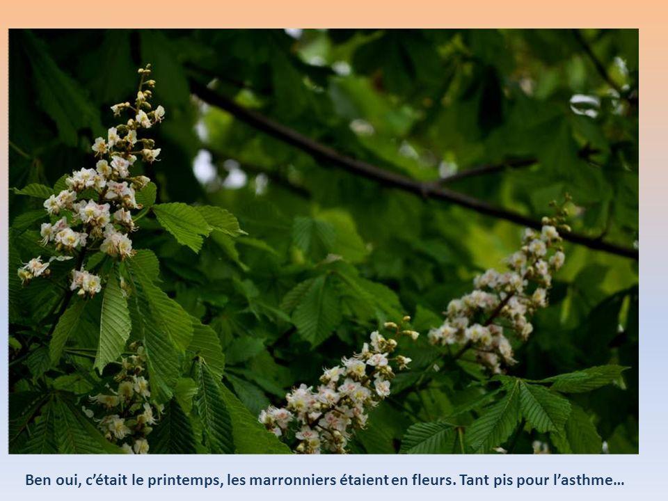 Ben oui, c'était le printemps, les marronniers étaient en fleurs