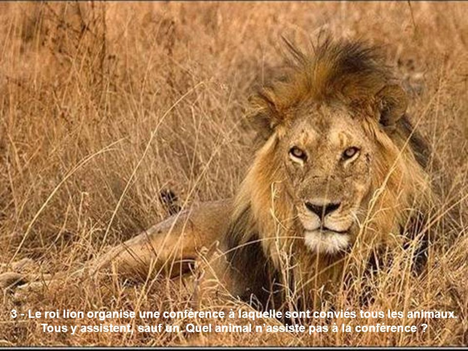 3 - Le roi lion organise une conférence à laquelle sont conviés tous les animaux.