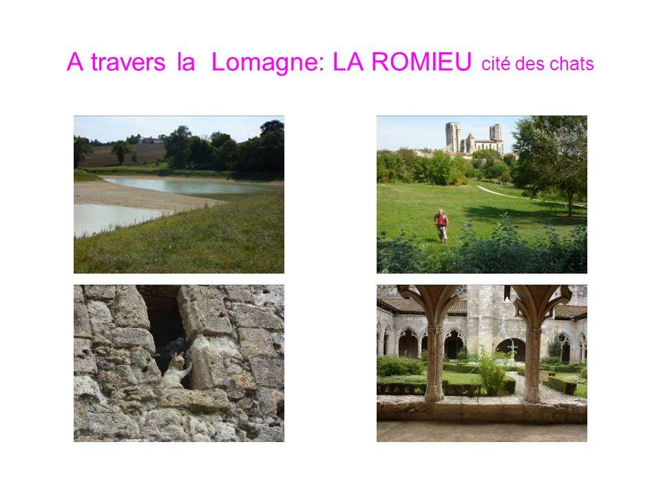 A travers la Lomagne: LA ROMIEU cité des chats