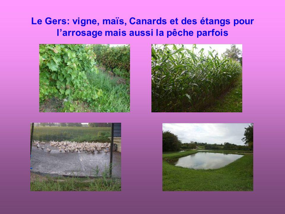 Le Gers: vigne, maïs, Canards et des étangs pour l'arrosage mais aussi la pêche parfois