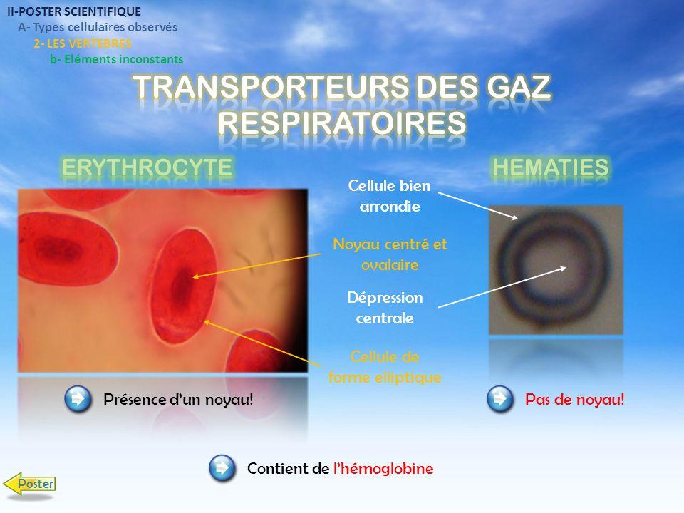 TRANSPORTEURS DES GAZ RESPIRATOIRES