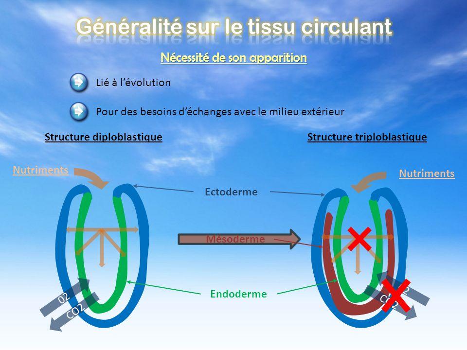 Structure diploblastique Structure triploblastique