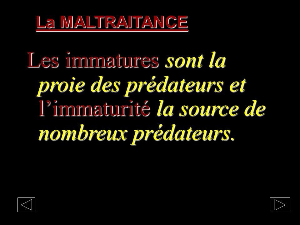 La MALTRAITANCE Les immatures sont la proie des prédateurs et l'immaturité la source de nombreux prédateurs.