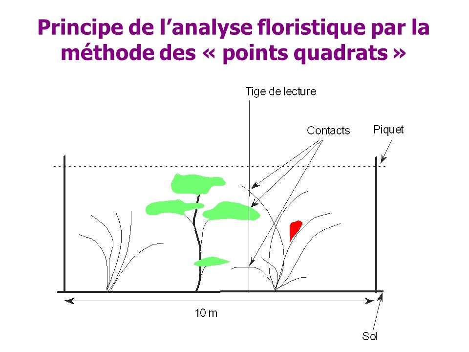 Principe de l'analyse floristique par la méthode des « points quadrats »