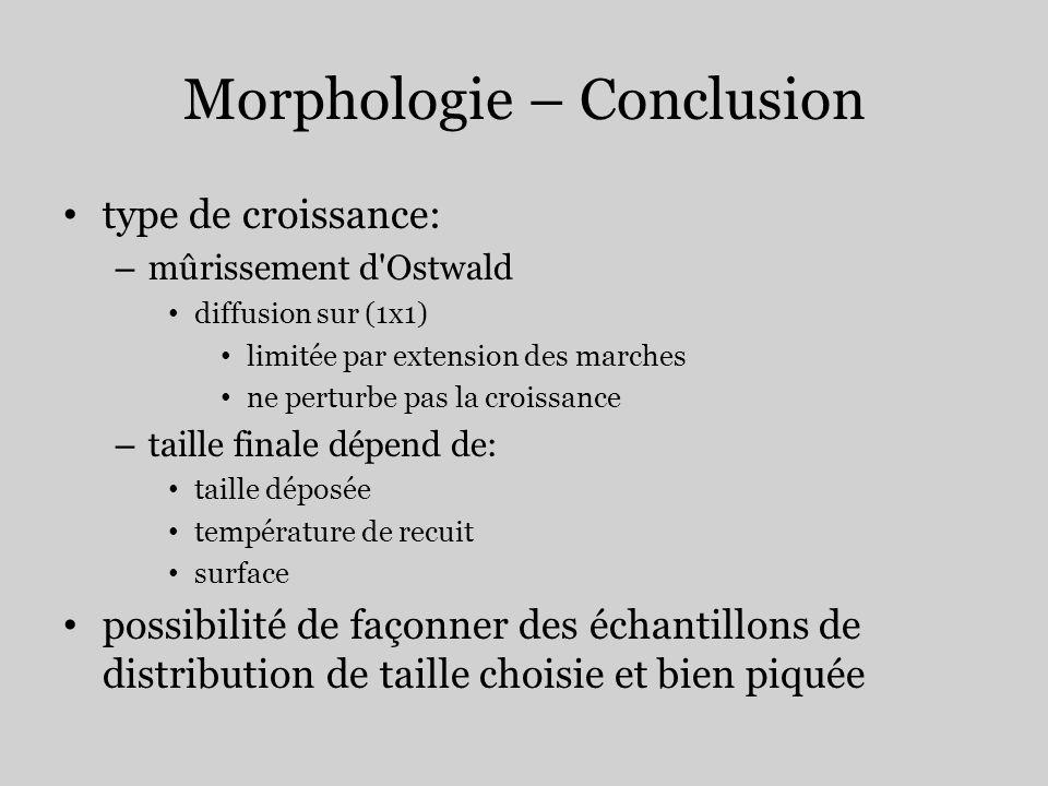 Morphologie – Conclusion