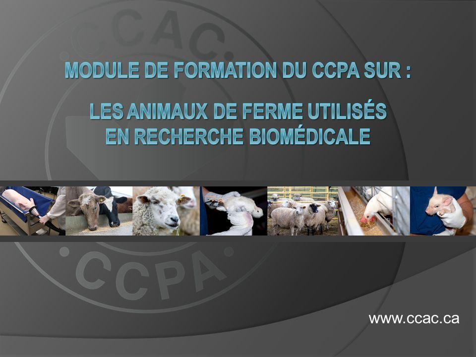 Module de formation du CCPA sur : les animaux de ferme utilisés en recherche biomédicale