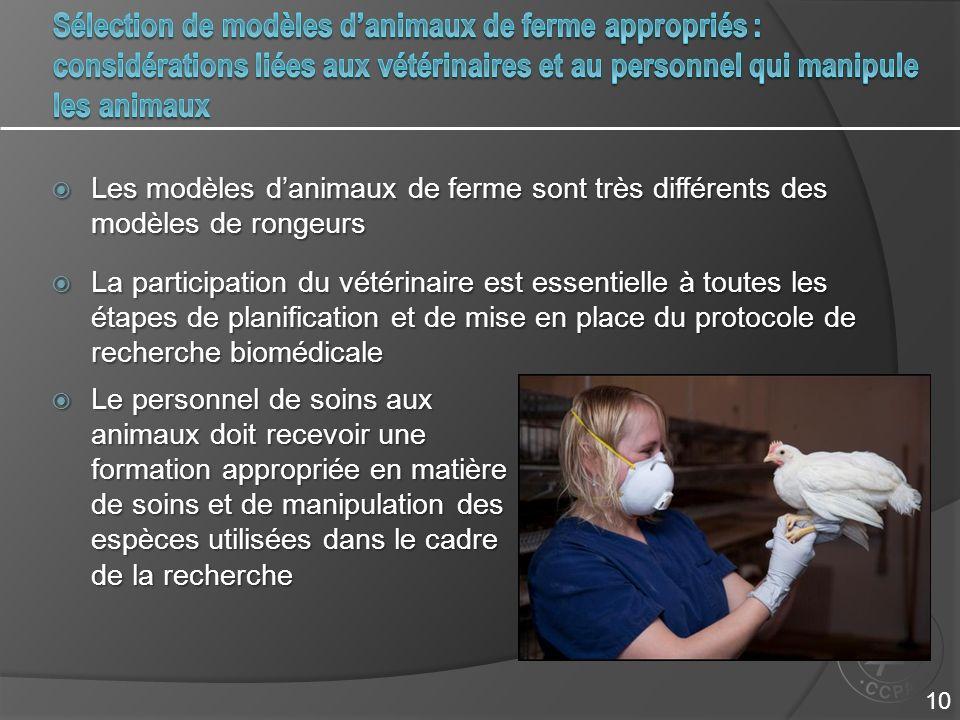Sélection de modèles d'animaux de ferme appropriés : considérations liées aux vétérinaires et au personnel qui manipule les animaux