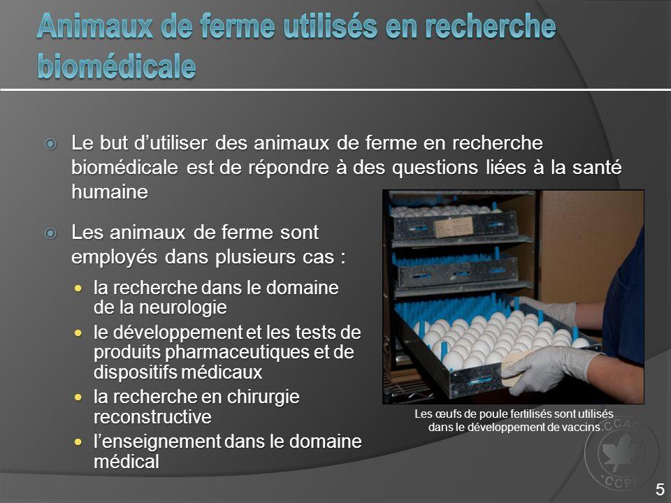 Animaux de ferme utilisés en recherche biomédicale