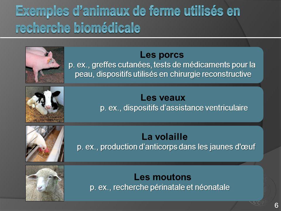 Exemples d'animaux de ferme utilisés en recherche biomédicale