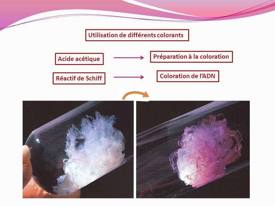 Utilisation de différents colorants