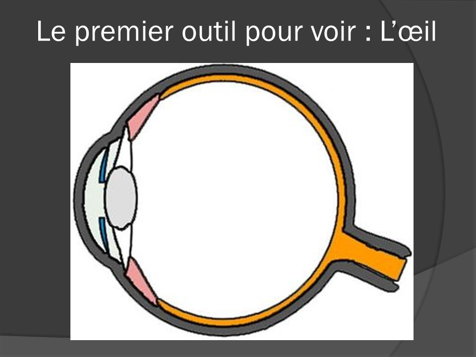 Le premier outil pour voir : L'œil