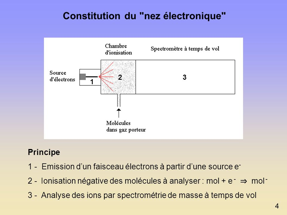 Constitution du nez électronique