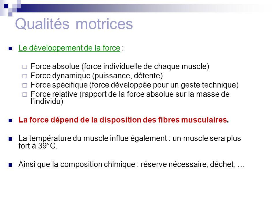 Qualités motrices Le développement de la force :