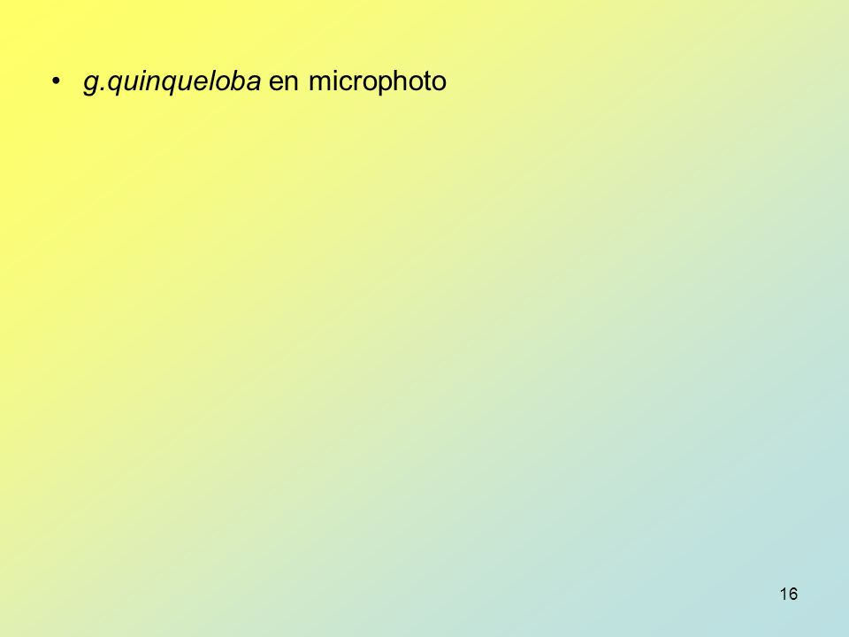 g.quinqueloba en microphoto