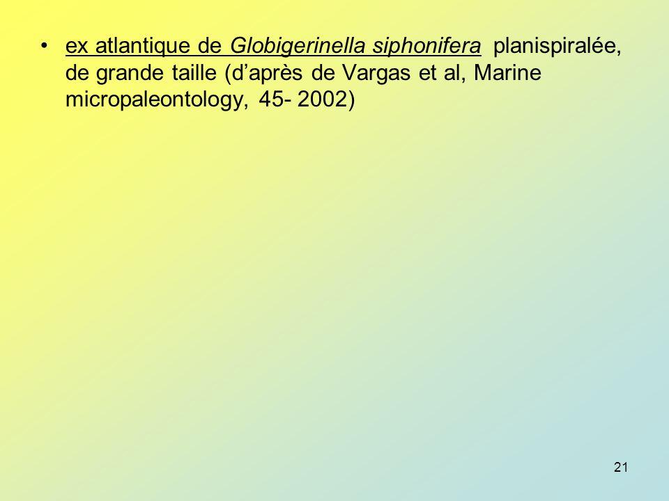 ex atlantique de Globigerinella siphonifera planispiralée, de grande taille (d'après de Vargas et al, Marine micropaleontology, 45- 2002)