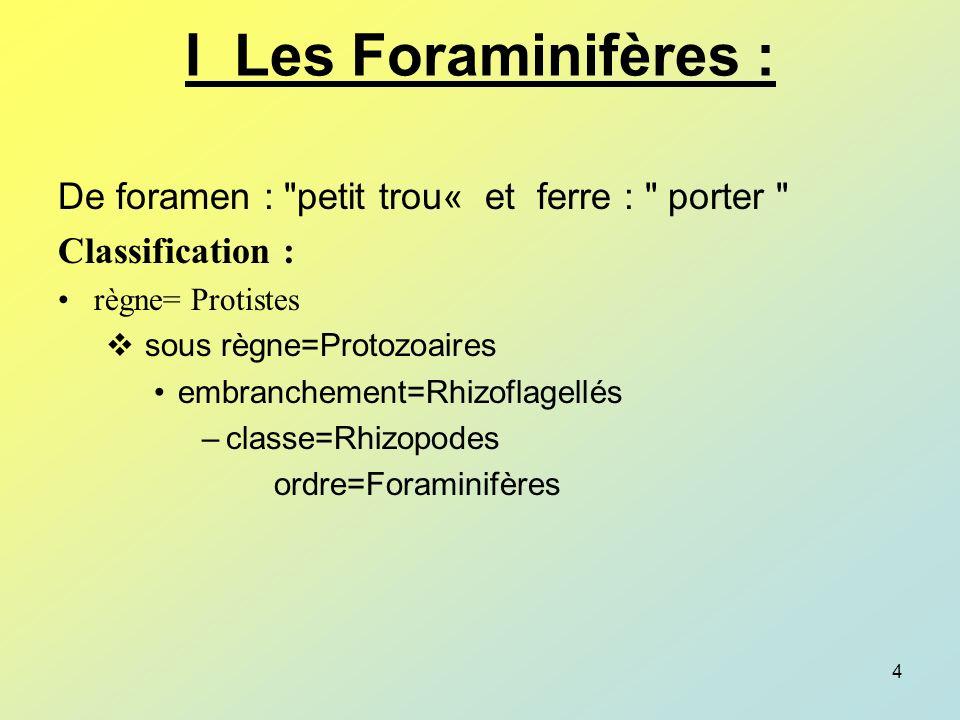 I Les Foraminifères : De foramen : petit trou« et ferre : porter