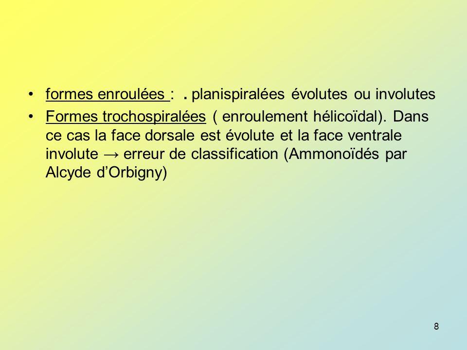 formes enroulées : . planispiralées évolutes ou involutes