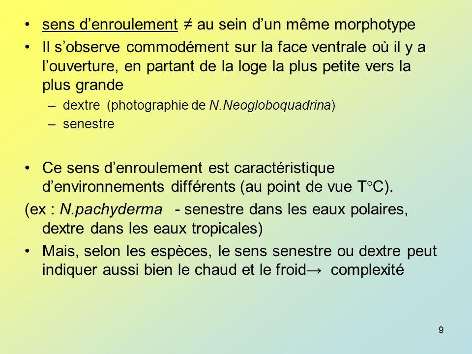 sens d'enroulement ≠ au sein d'un même morphotype