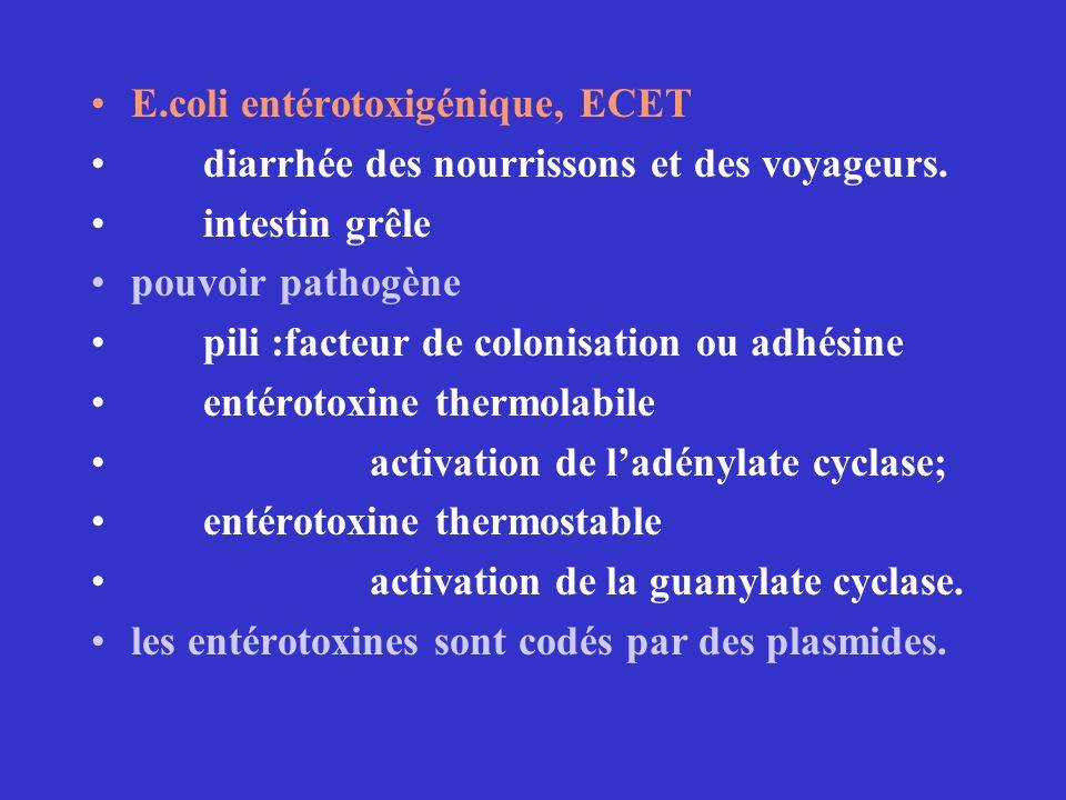 E.coli entérotoxigénique, ECET