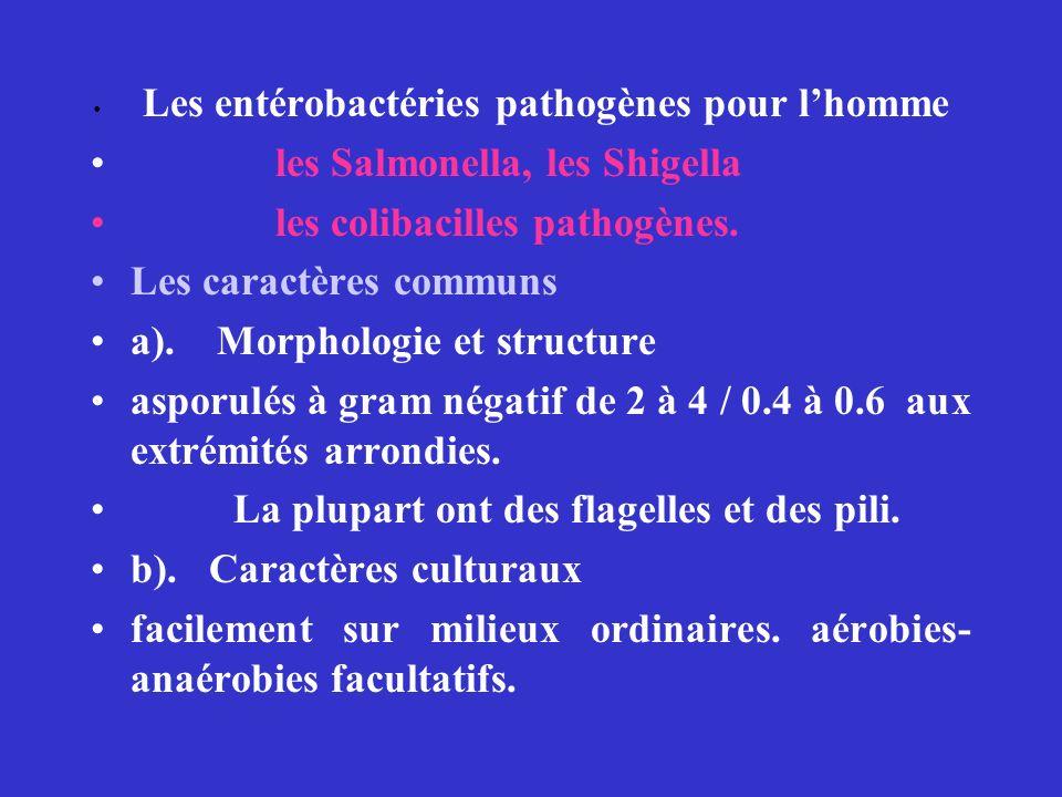 les Salmonella, les Shigella les colibacilles pathogènes.