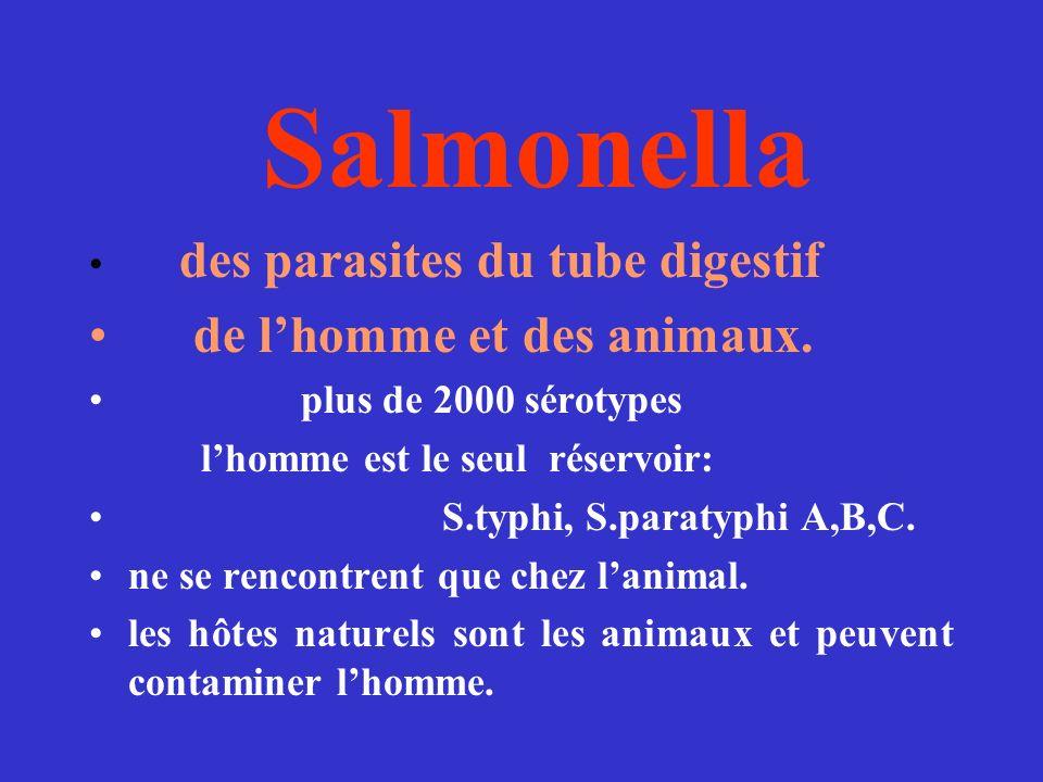 Salmonella de l'homme et des animaux. des parasites du tube digestif