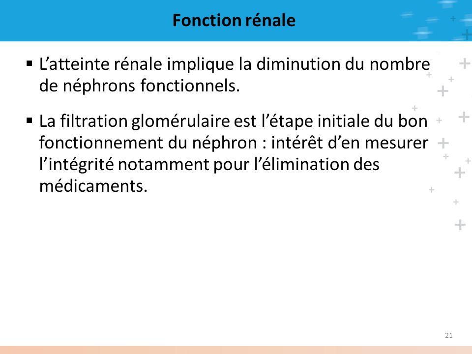 Fonction rénale L'atteinte rénale implique la diminution du nombre de néphrons fonctionnels.