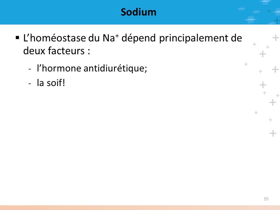 L'homéostase du Na+ dépend principalement de deux facteurs :