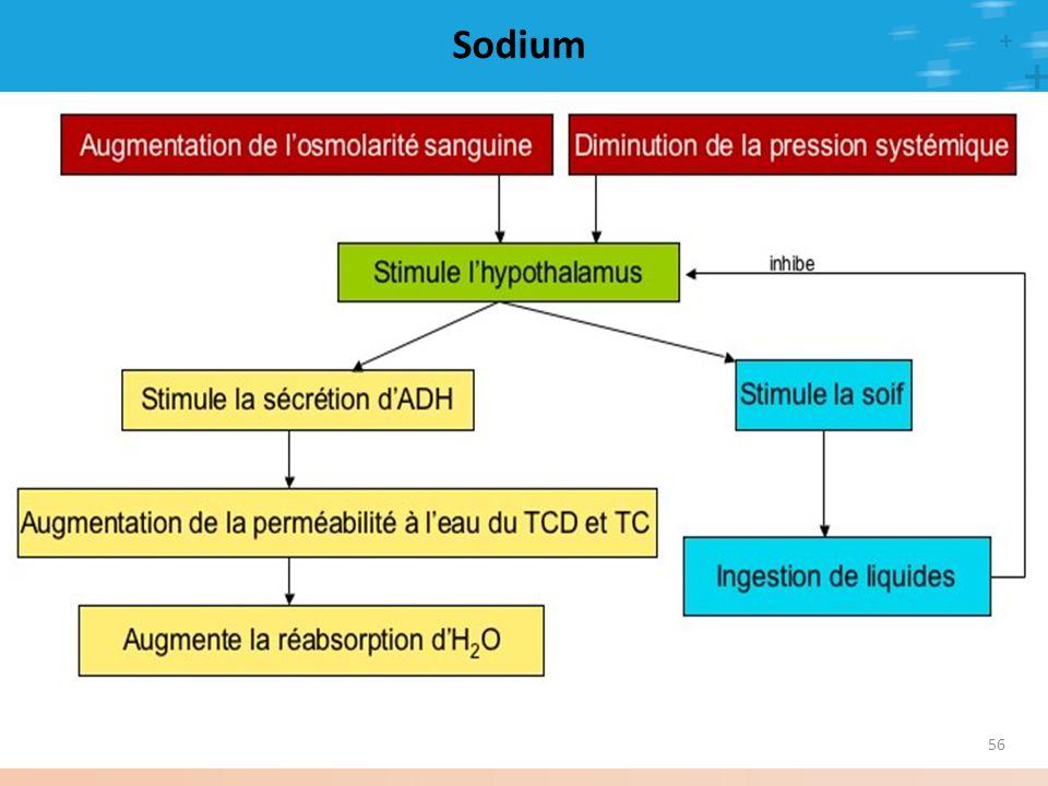 Sodium En réponse à une osmolarité augmentée ou à la suite d'une baisse du volume circulant (ex : saignement important) :