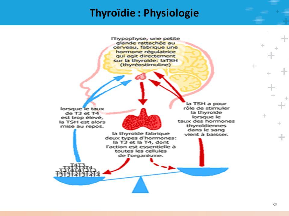 Thyroïdie : Physiologie