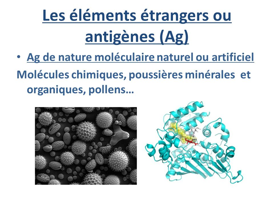 Les éléments étrangers ou antigènes (Ag)