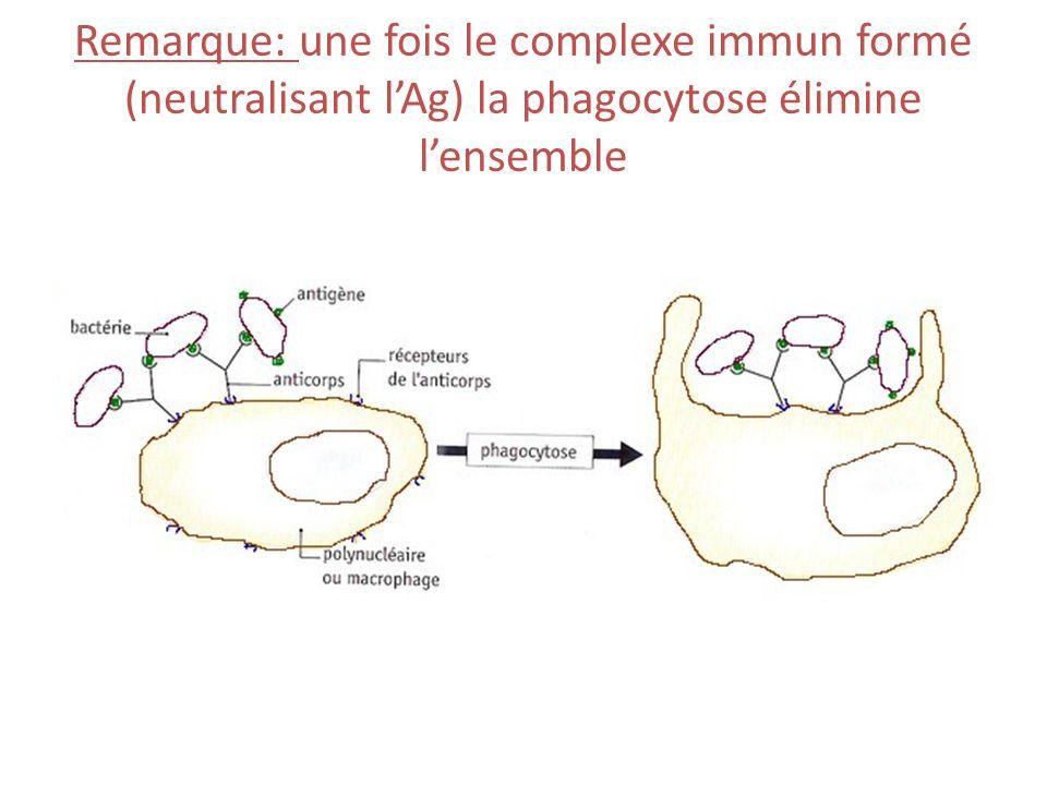 Remarque: une fois le complexe immun formé (neutralisant l'Ag) la phagocytose élimine l'ensemble