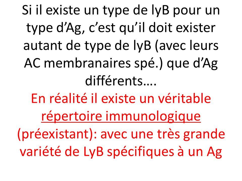 Si il existe un type de lyB pour un type d'Ag, c'est qu'il doit exister autant de type de lyB (avec leurs AC membranaires spé.) que d'Ag différents….