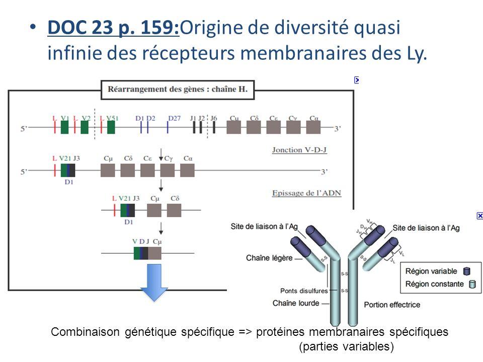 DOC 23 p. 159:Origine de diversité quasi infinie des récepteurs membranaires des Ly.