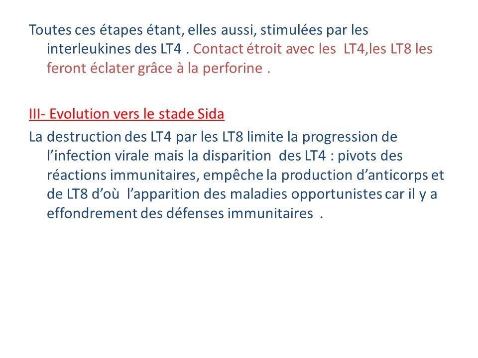 Toutes ces étapes étant, elles aussi, stimulées par les interleukines des LT4 .