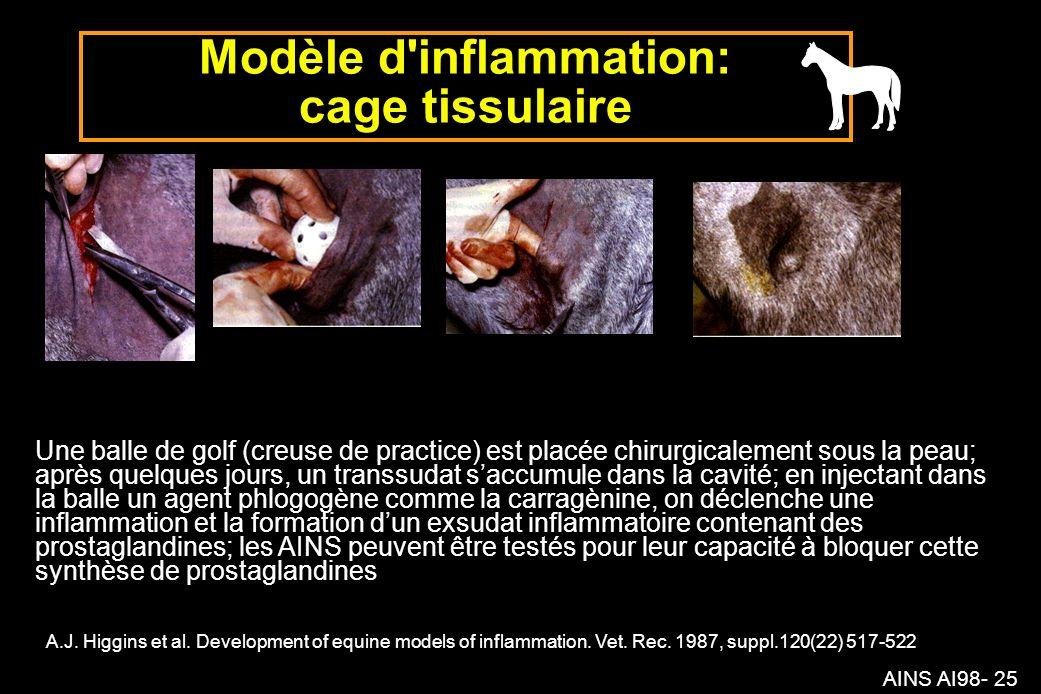 Modèle d inflammation: cage tissulaire