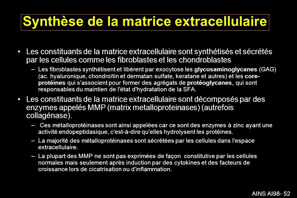 Synthèse de la matrice extracellulaire
