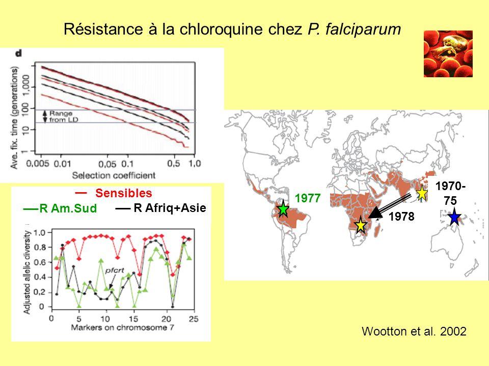 Résistance à la chloroquine chez P. falciparum