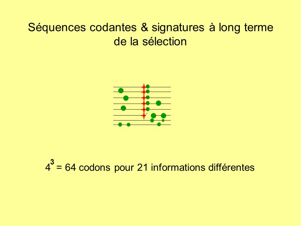 Séquences codantes & signatures à long terme de la sélection