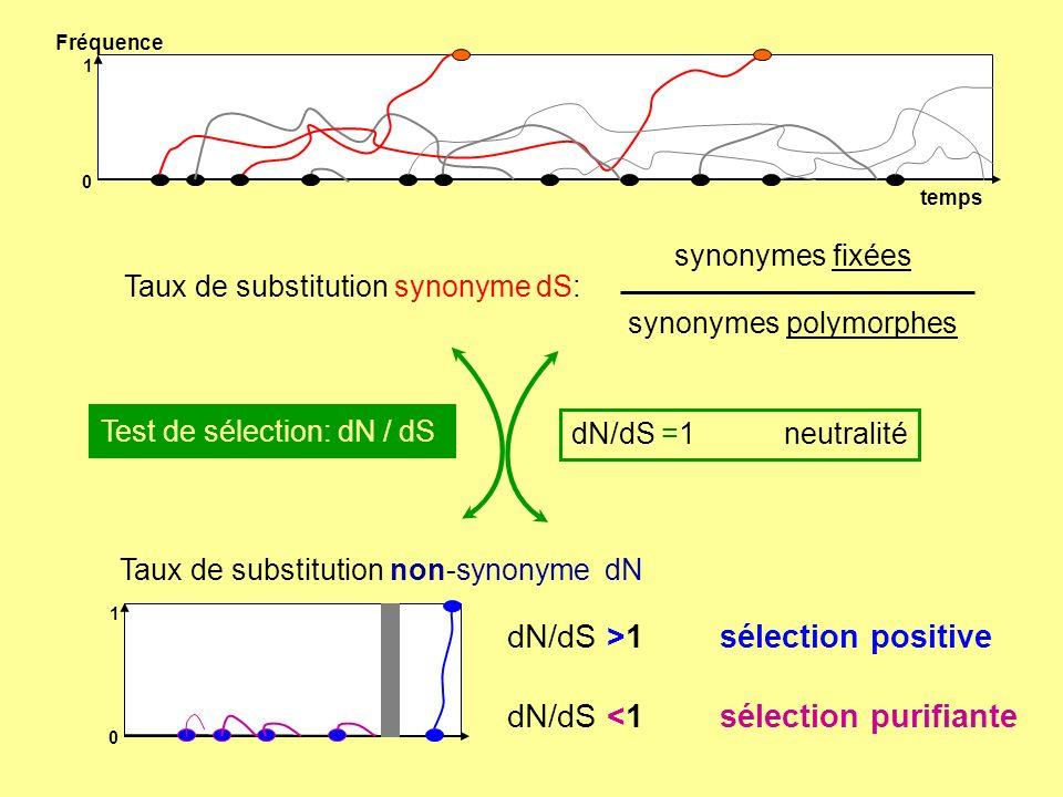 dN/dS >1 sélection positive