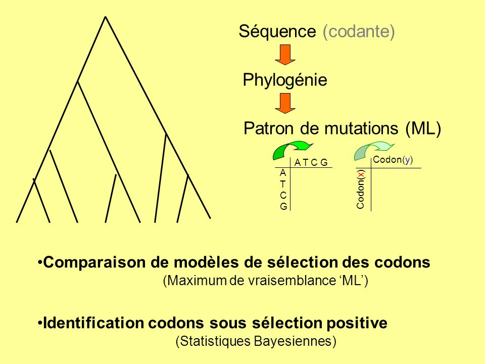 Patron de mutations (ML)